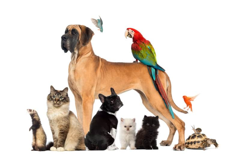 group of pets including dogs, cats, birds, and reptiles