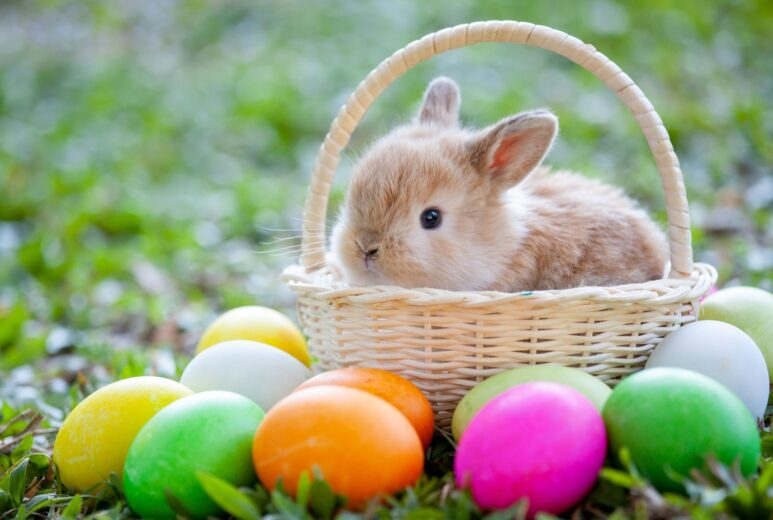 Baby bunny in a basket surrounded by easter eggs
