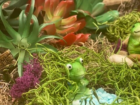 Planter with succulents and frog figurines